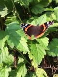 A borboleta que senta-se em um fundo da grama verde Vista de acima fotos de stock