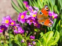 Borboleta que senta-se em uma flor Imagens de Stock Royalty Free