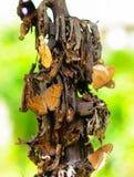 Borboleta que suga o néctar Imagens de Stock Royalty Free