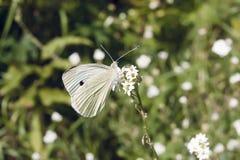 A borboleta senta-se em uma flor Imagem de Stock