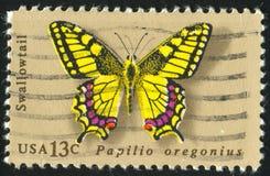 Borboleta Swallowtail imagem de stock royalty free