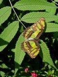 A borboleta/traça da natureza imagens de stock