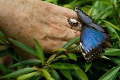 A borboleta tropical Fotos de Stock Royalty Free