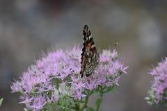 borboletas fotografia de stock royalty free