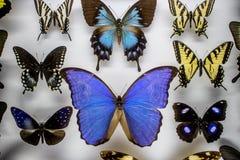 borboletas Imagem de Stock Royalty Free