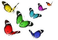 borboletas Fotos de Stock