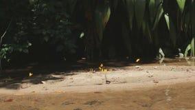 Borboletas amarelas que voam ao lado do lago no parque nacional filme