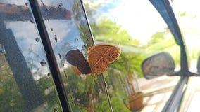 borboletas bonitas empoleiradas no vidro lateral do carro foto de stock