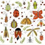 Borboletas brilhantes de voo, insetos na floresta, besouros naturais, animais pequenos, animais selvagens no parque Objetos isola fotografia de stock