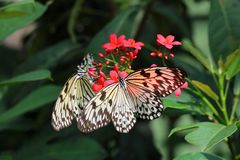 Borboletas de papel bonitas do papagaio Fotografia de Stock Royalty Free