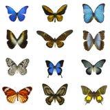 12 borboletas diferentes com fundo branco Foto de Stock Royalty Free