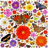 Borboletas e flores Fotografia de Stock Royalty Free