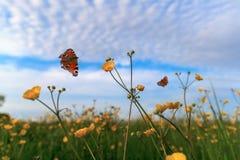 Borboletas e flores amarelas no fundo azul do céu nebuloso Imagem de Stock Royalty Free