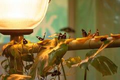 Borboletas e lâmpada fotografia de stock royalty free