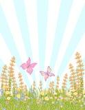 Borboletas em flores do prado fotografia de stock