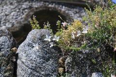 Borboletas girando da vela do esplendor no jardim de pedra, na rocha fotografia de stock royalty free