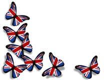 Borboletas inglesas da bandeira no branco Fotos de Stock