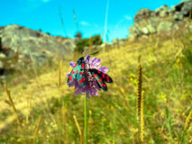 Borboletas na flor foto de stock