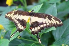 Borboletas no jardim das borboletas Fotos de Stock Royalty Free