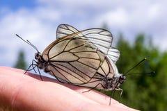 borboletas que acoplam-se na mão Imagem de Stock Royalty Free