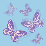 Borboletas roxas em um fundo azul Foto de Stock