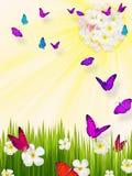 Borboletas sobre o plumeria da grama verde ilustração royalty free
