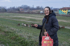 BORCA, SERBIA - NOVEMBER 29, 2014: Serbian old shepherdess showing her herd of goats Stock Image