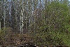 Borcea brzeg wczesna wiosna 4 Fotografia Stock