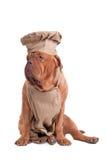 bordów Szef kuchni De Dogue ubierający odizolowywający podobieństwo zdjęcia stock