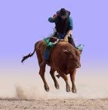 Bord auf einem Bull Lizenzfreie Stockfotografie