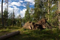 Bord de forêt Photos stock
