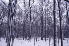 Bord de forêt de l'hiver Photos stock