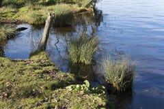 Bord de l'eau non cultivé Photographie stock