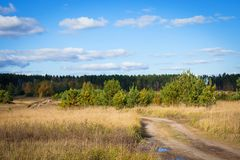 bord de la forêt Image stock