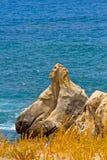 Bord de la mer Image stock