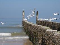 Bord de la mer Image libre de droits