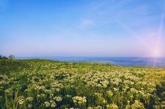 Bord de la mer avec des fleurs Image stock
