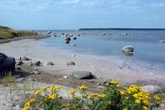 Bord de la mer avec des roches et des fleurs Photos stock
