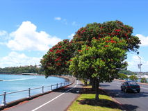 Bord de la mer d'Auckland image stock