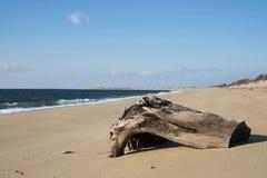 Bord de la mer de ressortissant de Cape Cod Images libres de droits