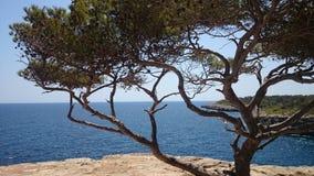 Bord de la mer Majorque Images stock