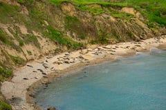 Bord de la mer national de Reyes de point en Californie photo stock