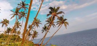 Bord de la mer parfait d'image avec le verger de noix de coco et le ciel bleu photographie stock