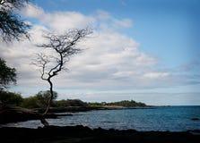 Bord de la mer rocailleux Hawaï d'arbre Images libres de droits