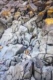 Bord de la mer rocheux Photo libre de droits