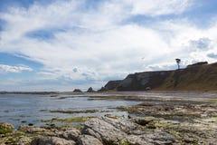 Bord de la mer rocheux avec un arbre et des mouettes Photo libre de droits