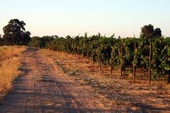 Bord de la vigne Images libres de droits