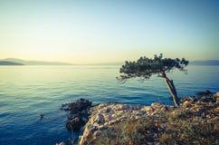 Bord de mer méditerranéen avec l'arbre isolé dans le premier plan Photo stock