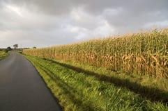 Bord de zone de maïs Photo stock