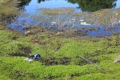 Bord des eaux sali avec des déchets photos libres de droits